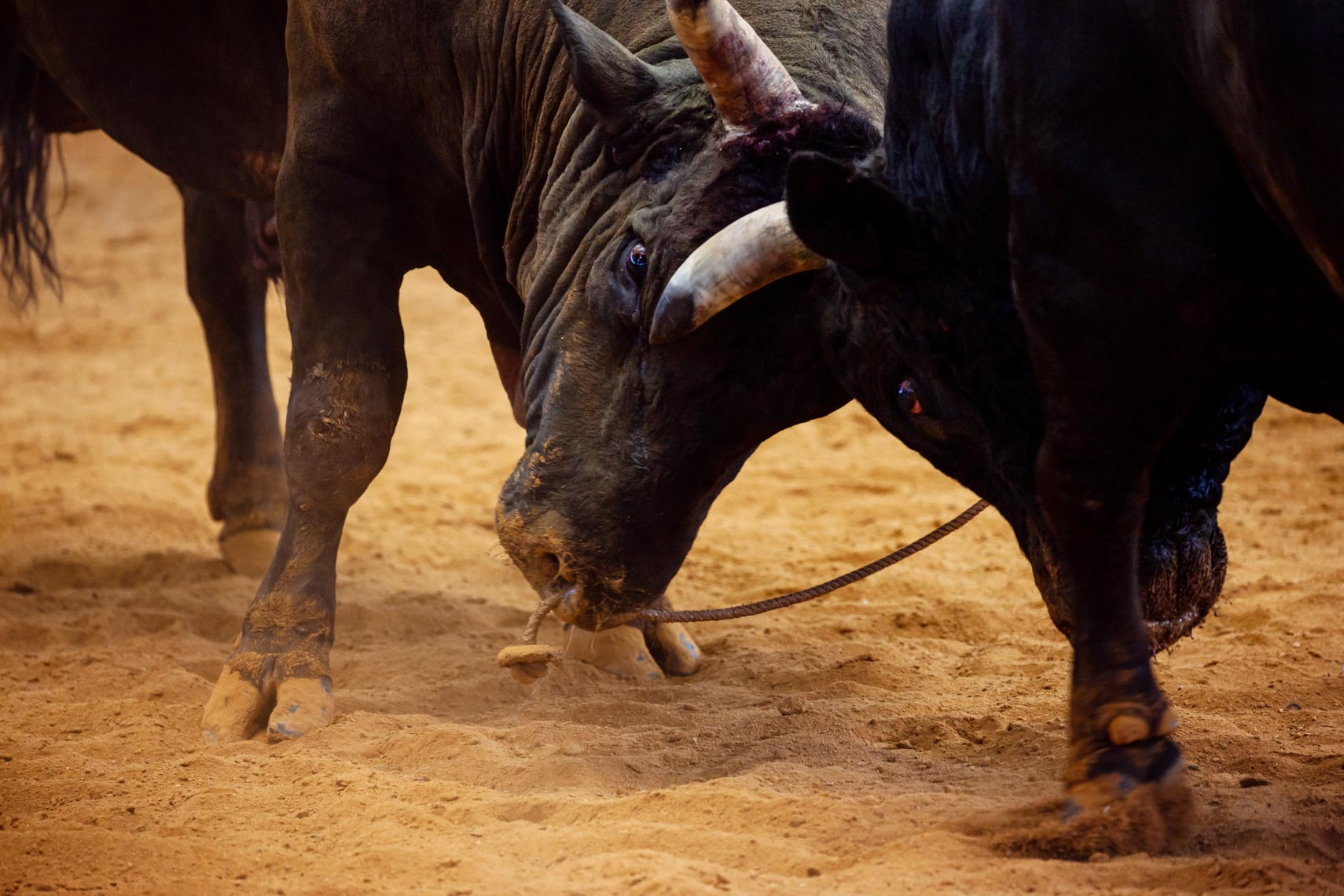 20190825_Bullfighting_472